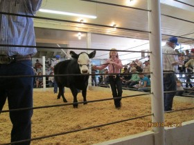 In the sale ring.