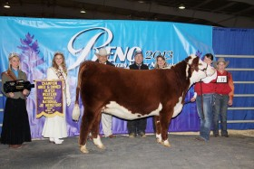In 2013, the Holt's gained a purple banner from the Western Nugget National Junior Hereford Show.