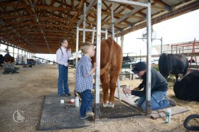 As a family, we enjoy showing our cattle. It's a way to advertise the genetics we offer. We also like seeing our kids take responsibility for an animal and work together to get things done.