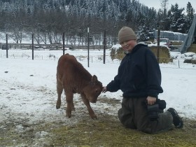 Maureen and Ryan's son, Dillon, taking the time to play with a new calf.
