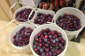 Plum Jelly (2)