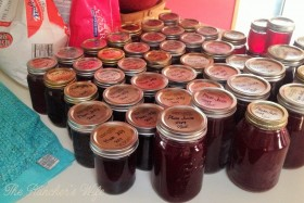 Plum Jelly (3)