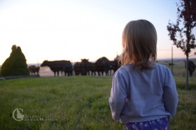Our baby girl checking out the mamas and babies in the pasture outside our yard. Not going to lie—I love looking out our windows and seeing pastures full of cows.
